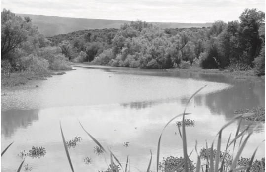 J. A. Coetzee et al. 2009: Before and after the establishment and spread of N. eichhorniae in New Years Dam, South Africa. Released in 1990, N. eichhorniae had reduced the infestation of water hyacinth to 10% cover by 2000.  Photos from: J. A. Coetzee, M. P. Hill, M. H. Julien, T. D. Center, and H. A. Cordo. 2009. Biological Control of Tropical Weeds using Arthropods, ed. R. Muniappan, G.V.P. Reddy, and A. Raman. Cambridge University Press