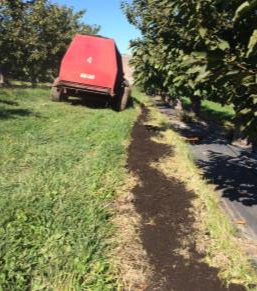 Figure 5. Spreading compost in the tilled strip where landscape fabric is used (photo by Jaime Reyes)