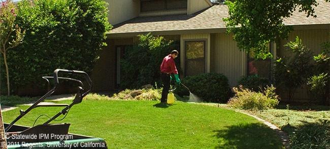 Maintenance gardener spraying lawn and landscape area.