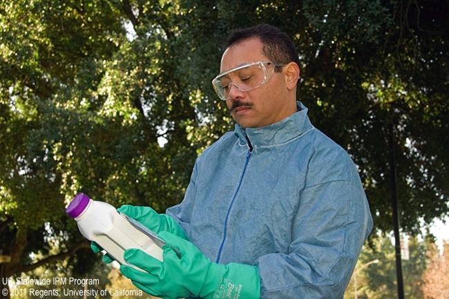 Maintenance gardener reading pesticide label.