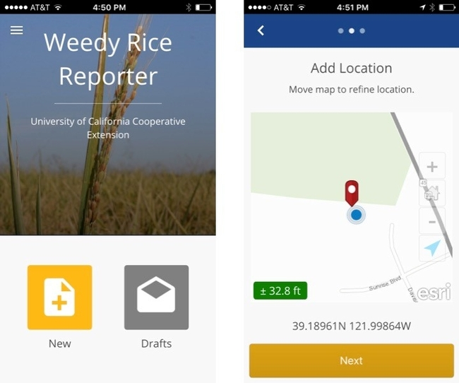 Weedy Rice Reporter App for California rice: available in GooglePlay and ITunes stores