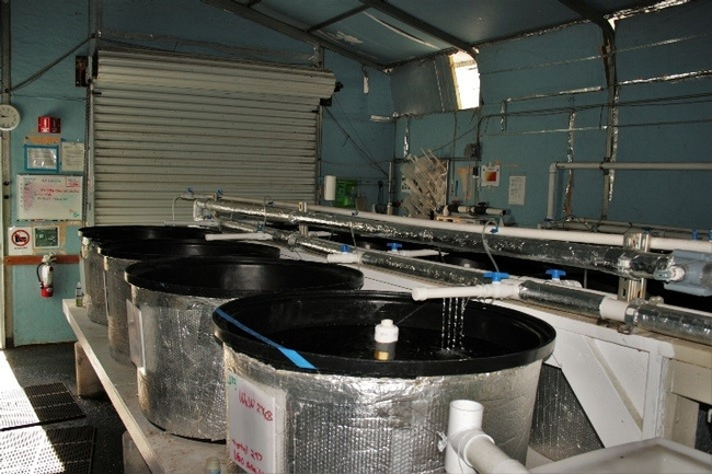 Testing facility at the Center for Aquatic Biology and Aquaculture at UC-Davis (source: CABA Staff)