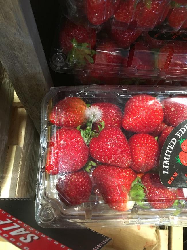 Weed seedling in packaged strawberry