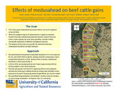 Effects of Medusahead on Beef Cattle Gains