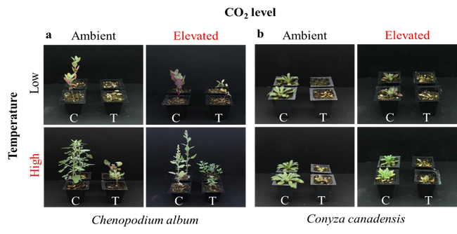 Figure 2. Plant response to glyphosate under different environmental conditions.