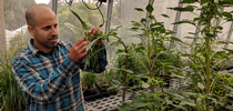Maor Matzrafi is a post-doctoral researcher with Marie Jasieniuk's lab at UC Davis. for UC Weed Science Blog