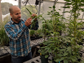 Maor Matzrafi is a post-doctoral researcher with Marie Jasieniuk's lab at UC Davis.