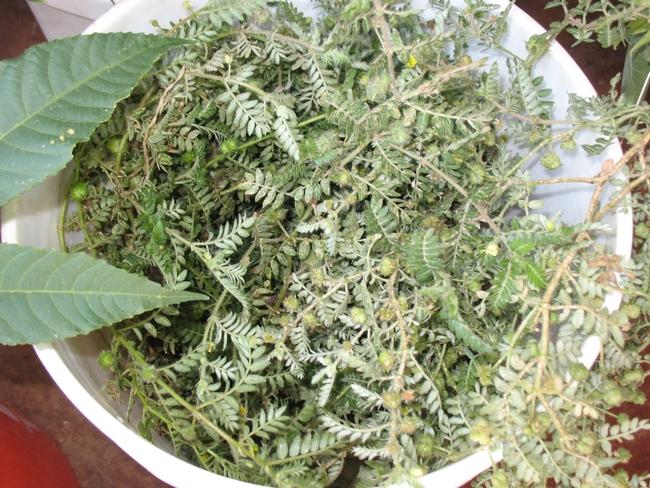 Weed Science School_081