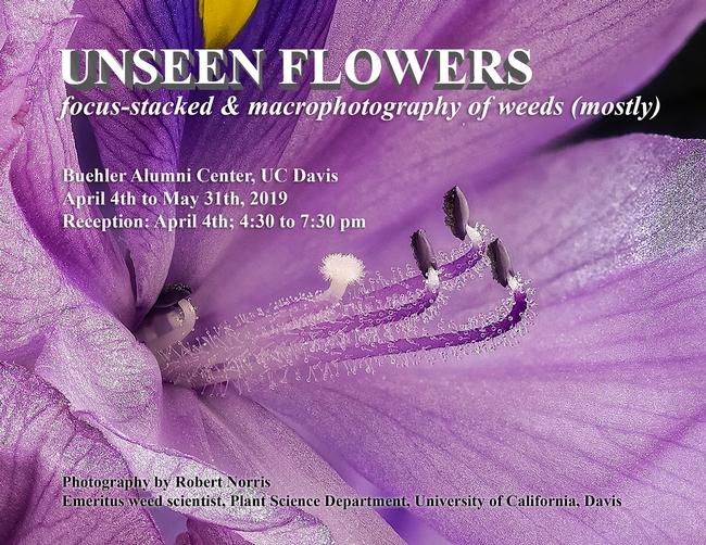 Unseen flowers exhibit announcement
