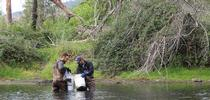 John Miskella (left) and Rui Adachi sampling for curlyleaf pondweed in Putah Creek. Photo: Sara Ohadi. for UC Weed Science Blog