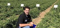 Plant Sciences grad student Matt Fatino, UC Davis, addressing herbicide control for broomrape weed in tomato fields. (photo Ann Filmer/UC Davis) for UC Weed Science Blog