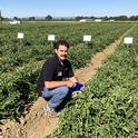 Plant Sciences grad student Matt Fatino, UC Davis, addressing herbicide control for broomrape weed in tomato fields. (photo Ann Filmer/UC Davis)