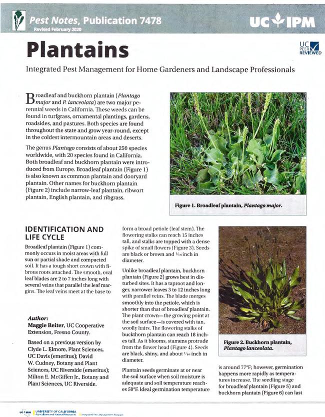 Pest Notes: Plantains publication