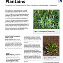 Pest Notes: Plantains publication