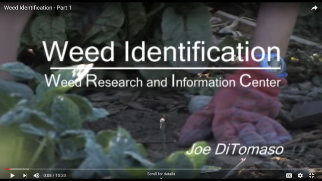 Training video--Weed identification