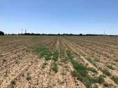 tumbleweed seed dispersal Hanson