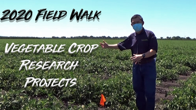 2020 Field Walk with UC Cooperative Extension Vegetable Crops Advisor Zheng Wang