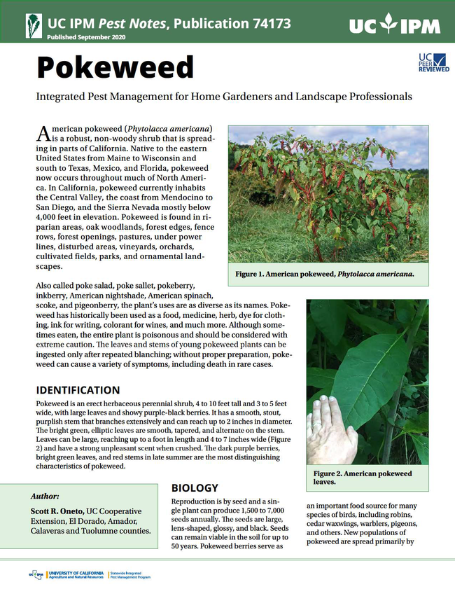 pnpokeweed-cover-canvas40