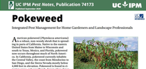 Pest Notes-Pokeweed cover for UC Weed Science Blog