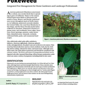 Pest Notes-Pokeweed cover