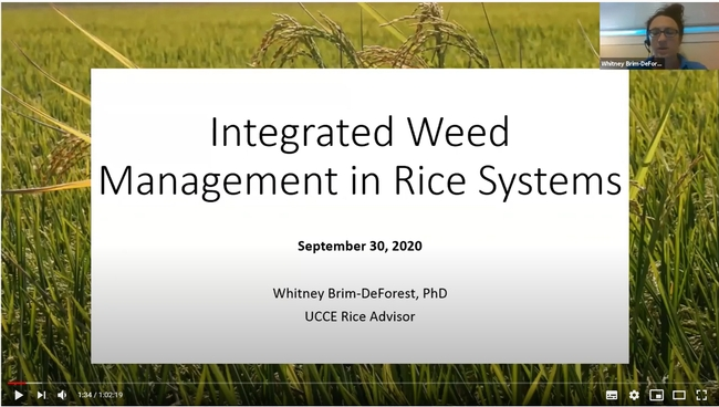 Integrated Weed Management in Rice Systems presentation by Whitney Brim-DeForest