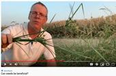 video cover_Can weeds be beneficial?