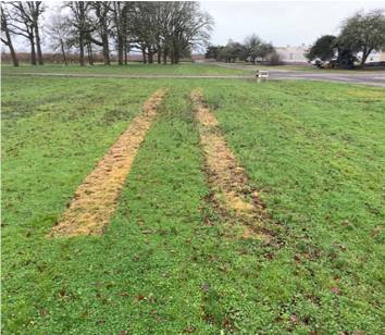 Figure 3. Area treated with Electric Weed Control.