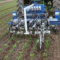 CUTLINE: First-generation, vision-based, intelligent cultivators are now available to help control weeds in specialty crops. (Photo courtesy of Steve Fennimore, University of California, Davis.)