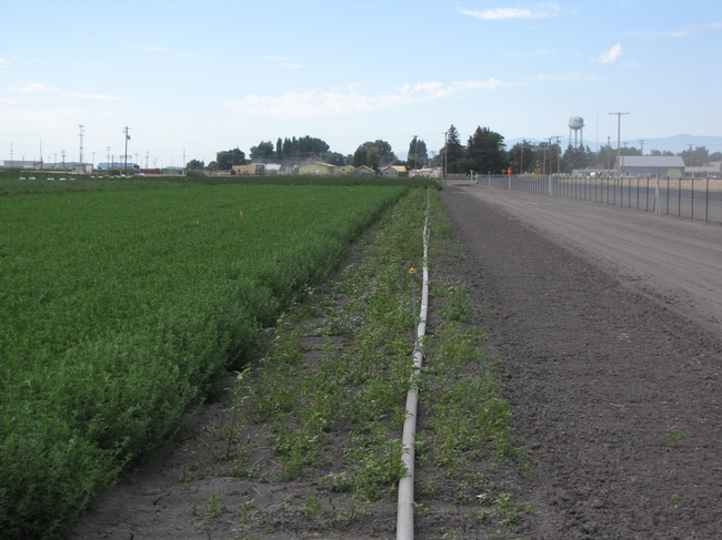Roadside without Preemergence Herbicide Application