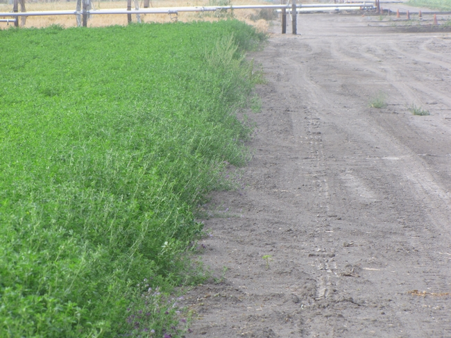 Roadside with Preemergence Herbicide Application