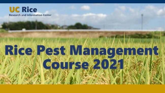 UC Rice Pest Management Course 2021 eventbanner