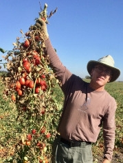 Scott Stoddard, UC Cooperative Extension Merced-Madera Counties Vegetable Crops and Soils Farm Advisor
