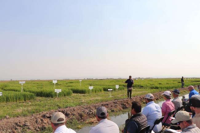 Dr. Kassim Al-Khatib at the CA Rice Field Day 2021