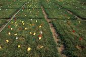 Gap size field