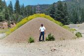 Gravel Pile Dyer's Woad and Mullein Klamath NF Marla Knight web
