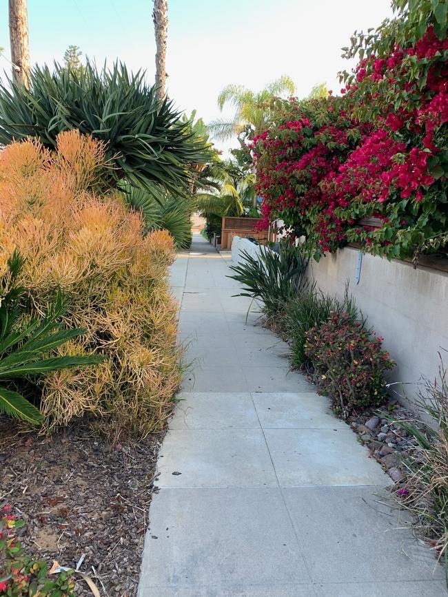 hazardous plants are found along a walkway in San Diego California