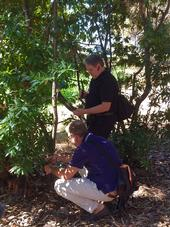 Doug Schmidt, standing, and Matteo Garbeletto examine a bay laurel on the UC Berkeley campus.