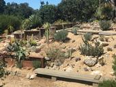 Most Californians don't have a desert landscape designed to withstand the limited water and high temps like the desert garden display at the UC Santa Cruz botanical garden. (Credit: Lauren Snowden)