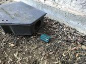 Rodenticide bait exposed outside a self-contained bait station. (Credit: K Windbiel-Rojas)
