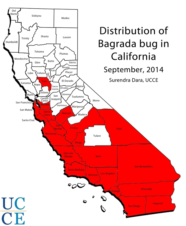 Distribution of Bagrada Bug in CA, updated Sept. 2014.