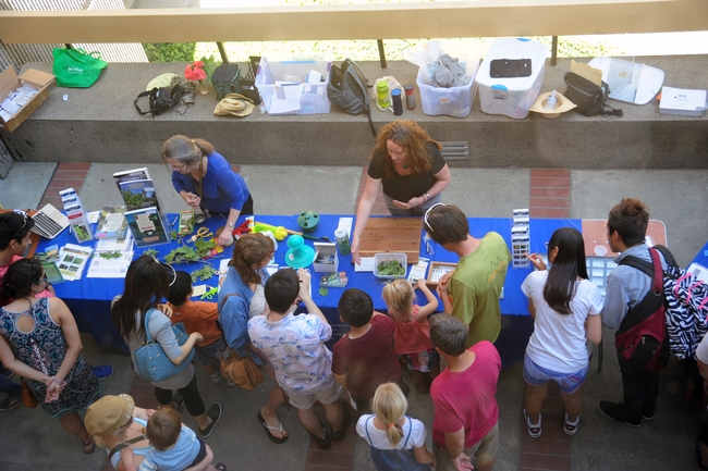 A bird's eye view of the UC IPM display in front of Briggs Hall during the 101st annual campuswide Picnic Day. Staffing the tables are Extension entomologist special emeritus Mary Lou Flint (left), and Karey Windbiel-Rojas, associate director for urban and community IPM (right). [Photo by Kathy Keatley Garvey]
