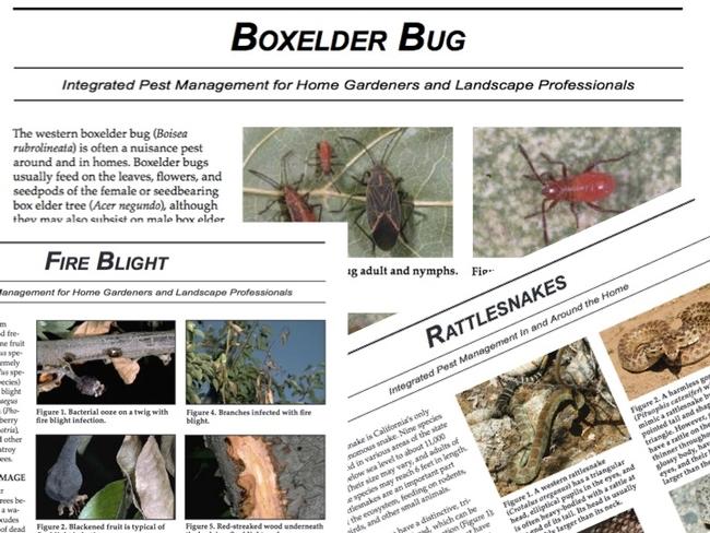 Pest Notes