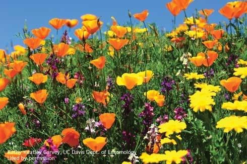 Figure 3. Flower field. [K.K.Garvey]