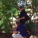 Doug Schmidt, standing, and Matteo Garbeletto examine a bay laurel on the UC Berkeley campus.