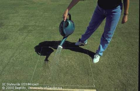 Performing a drench test in a square of lawn. [J.K.Clark]