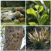 Invasive species.