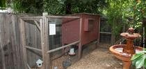 A backyard chicken coop. [UC ANR] for Pests in the Urban Landscape Blog