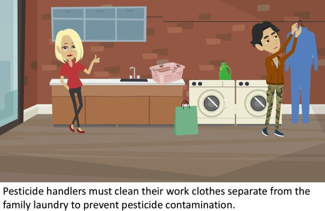 Pesticide handlers must clean their work clothes separate from the family laundry to prevent pesticide contamination. for Pests in the Urban Landscape Blog