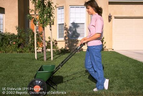 Fertilizing a lawn. (Credit: Steven E. Lock) for Pests in the Urban Landscape Blog