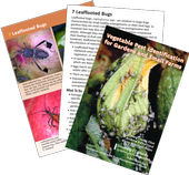Vegetable Pest ID Cards.